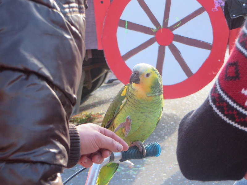 papuga_cantagrillo_moja_toskania