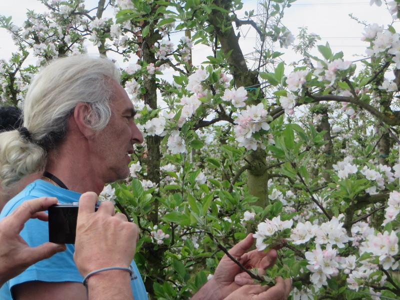 Ezio wyjasnia poszczegolne fazy zwiazane ze zbieraniem jablek