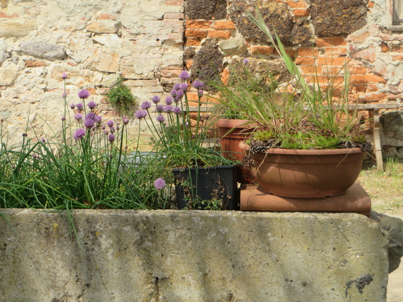 fioletowe_kwiatki_moja_toskania