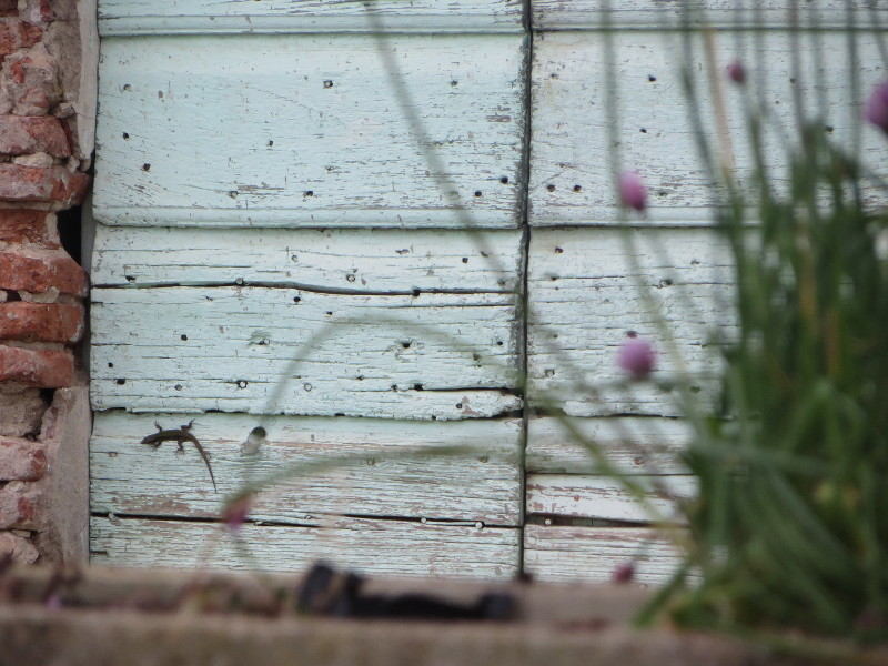 jaszczurka_na_toskanskich_drzwiach_moja_toskania