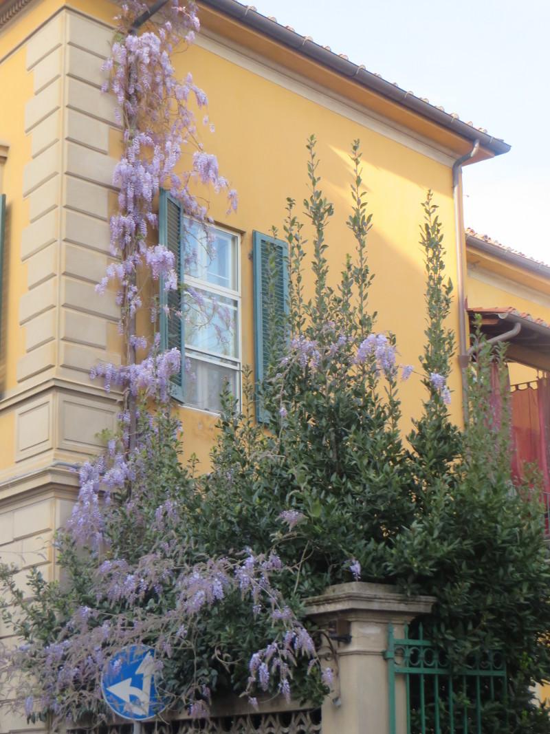 okno_i_kwiaty_fioletowe_moja_toskania