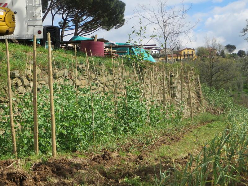 plantacja_fasoli_porciano_moja_toskania