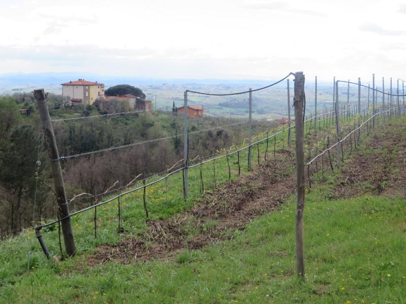 winorosle_widok_z_porciano_moja_toskania