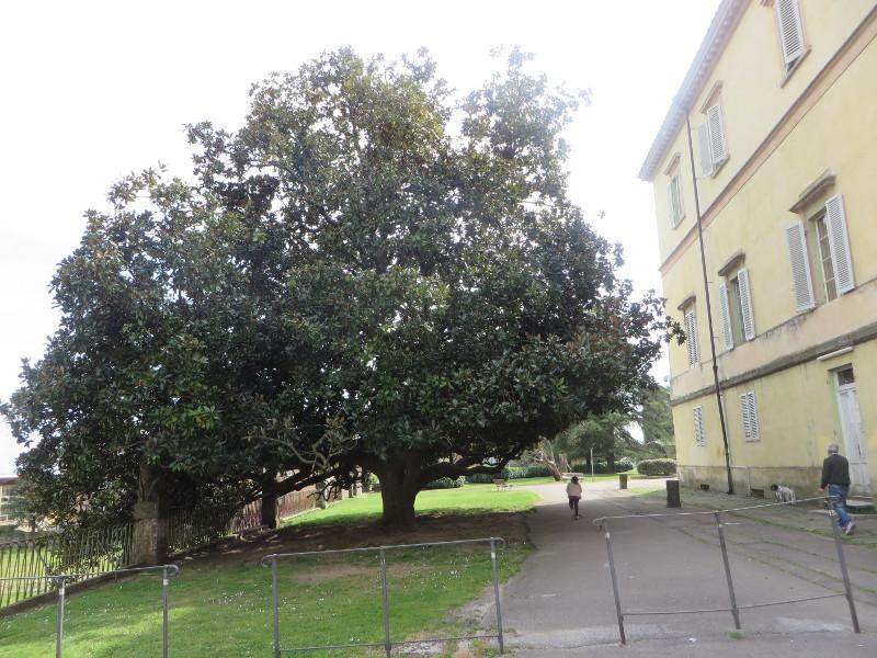 duze_drzewo_park_villone_moja_toskania_pistoia