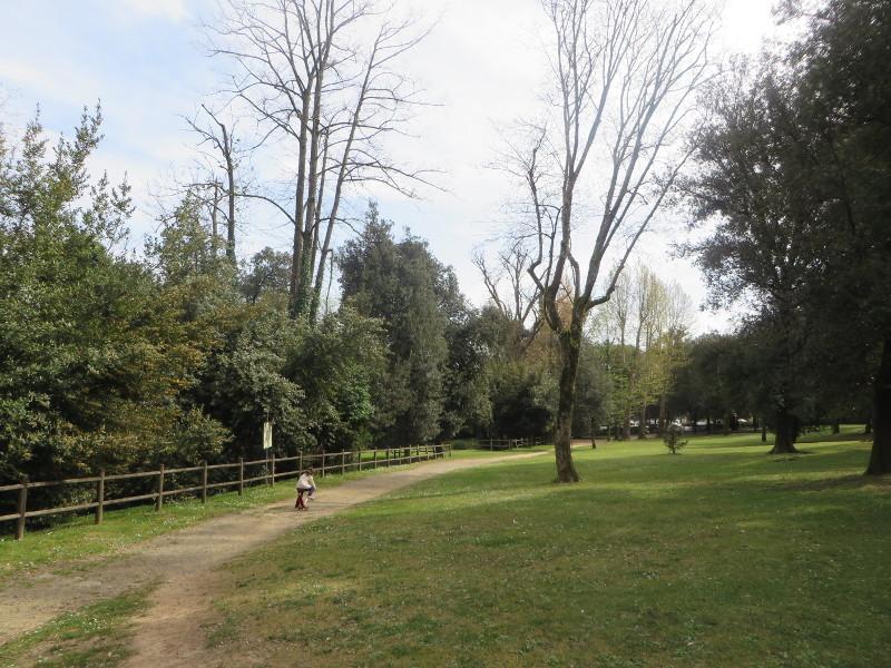 Sciezki w parku
