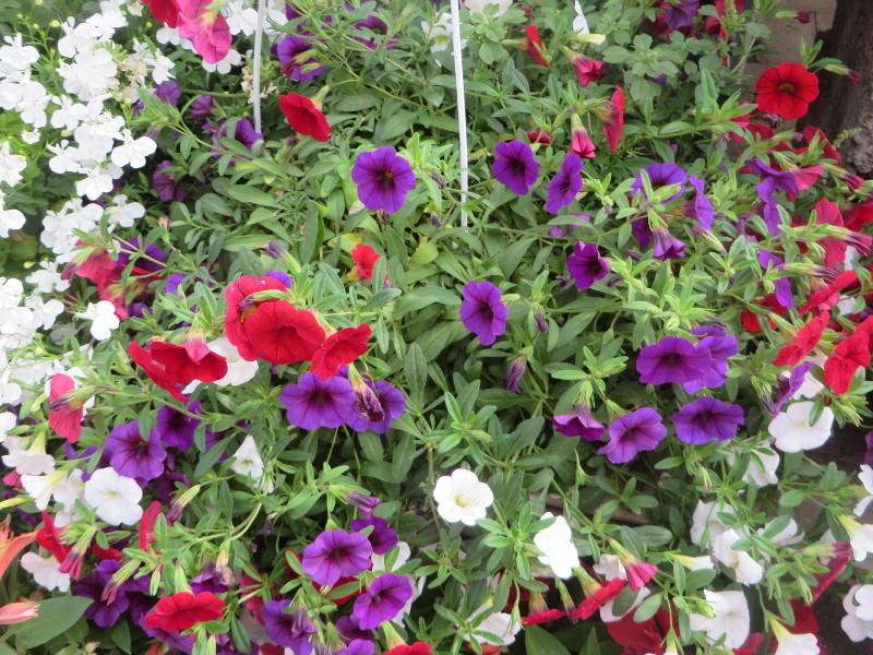 kolorowe_kwiaty_moja_toskania