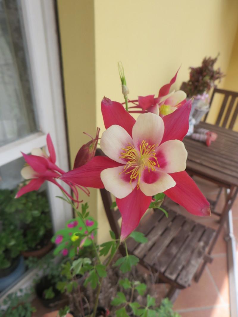 kwiatek_dla_mamy_moja_toskania