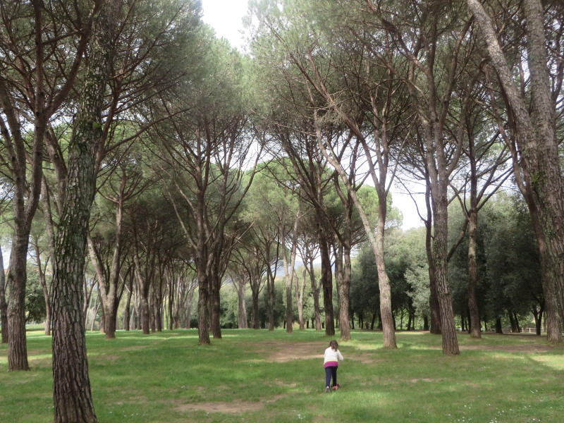 pineta_w_parku_villone_moja_toskania