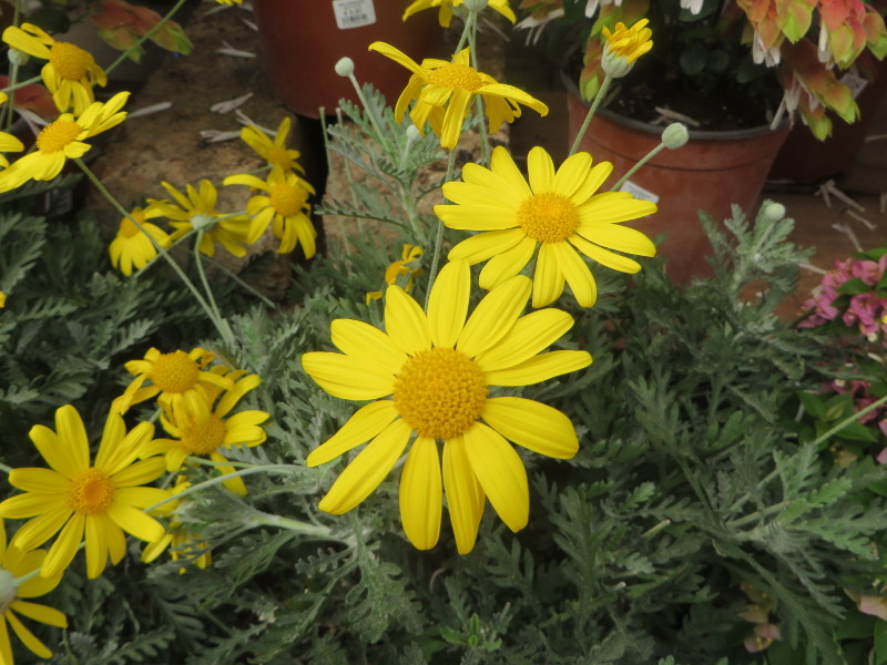 zolte_kwiatki_moja_toskania
