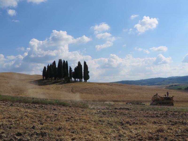 cyprysy_i_traktor_moja_toskania