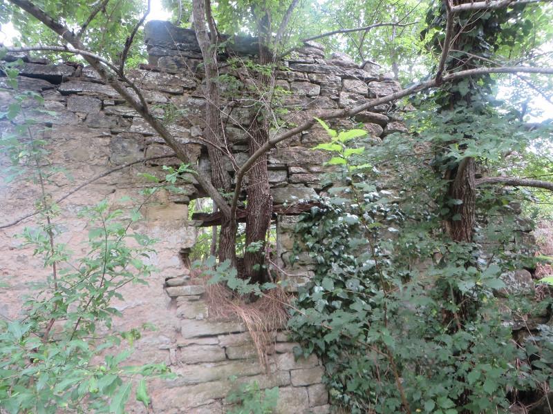 drzewo_wychodzace_z_okna_moja_toskania_castiglioncello