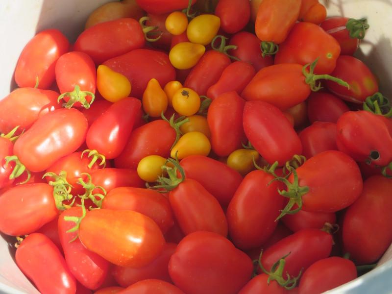 pomidory_zolte_i_czerwone_moja_toskania