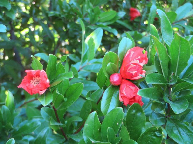 rozowe_kwiatki_moja_toskania