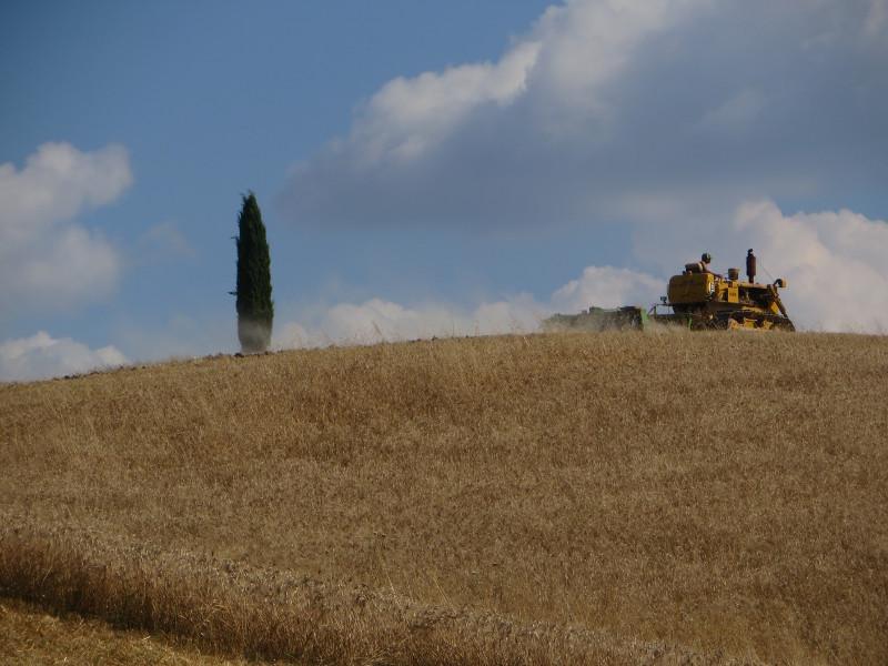 traktor_i_cyprys_moja_toskania