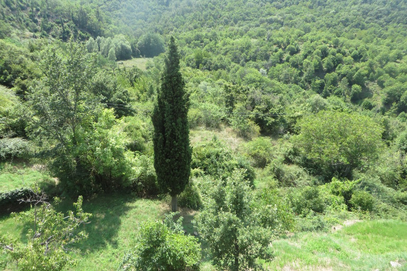 cyprys_bivignano_moja_Toskania