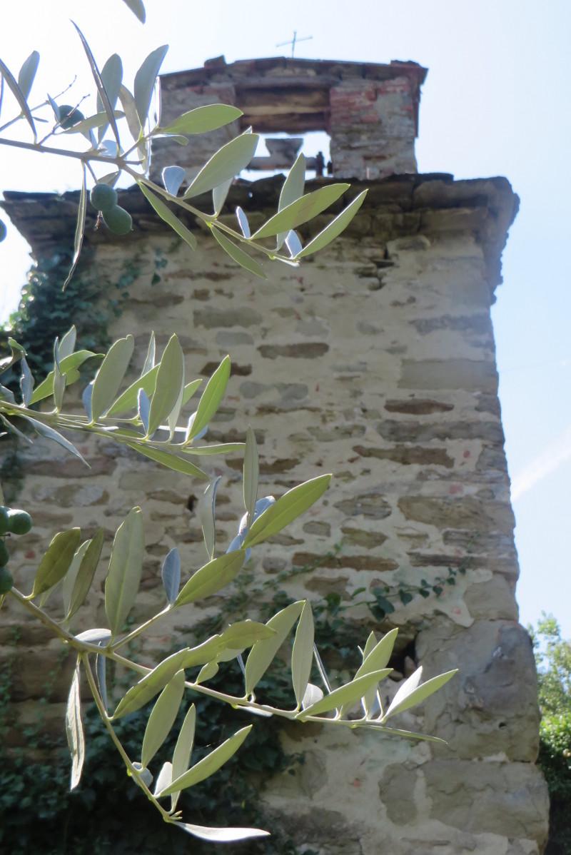 dzwonnica_drzewo_oliwkowe_moja_Toskania