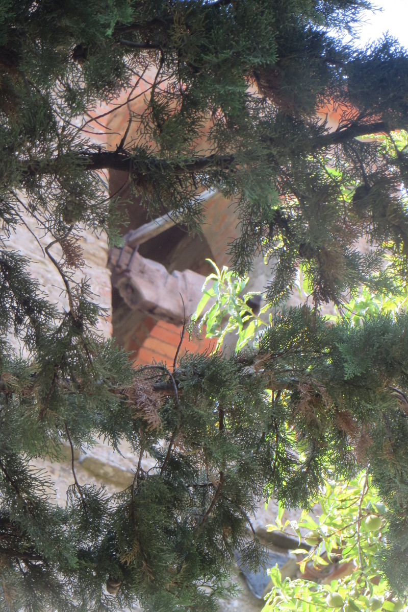 dzwonnica_za_drzewami_moja_Toskania_bivignano