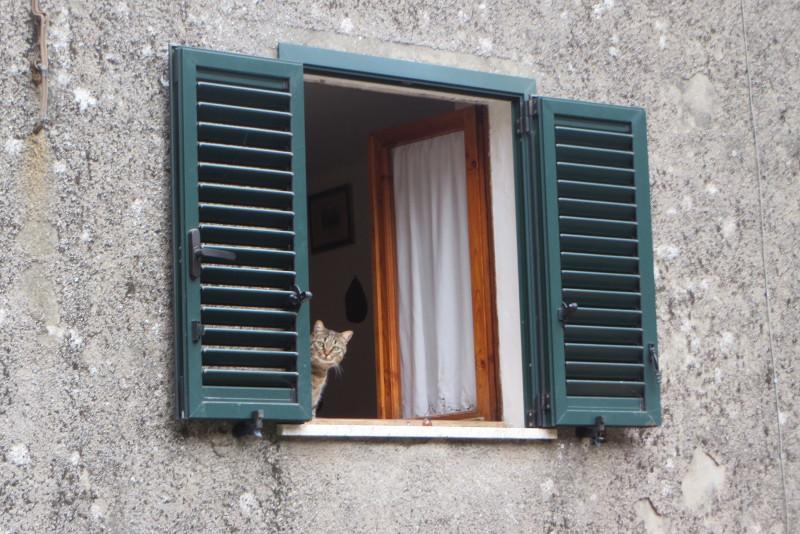 kot_w_oknie_moja_Toskania_biagioni