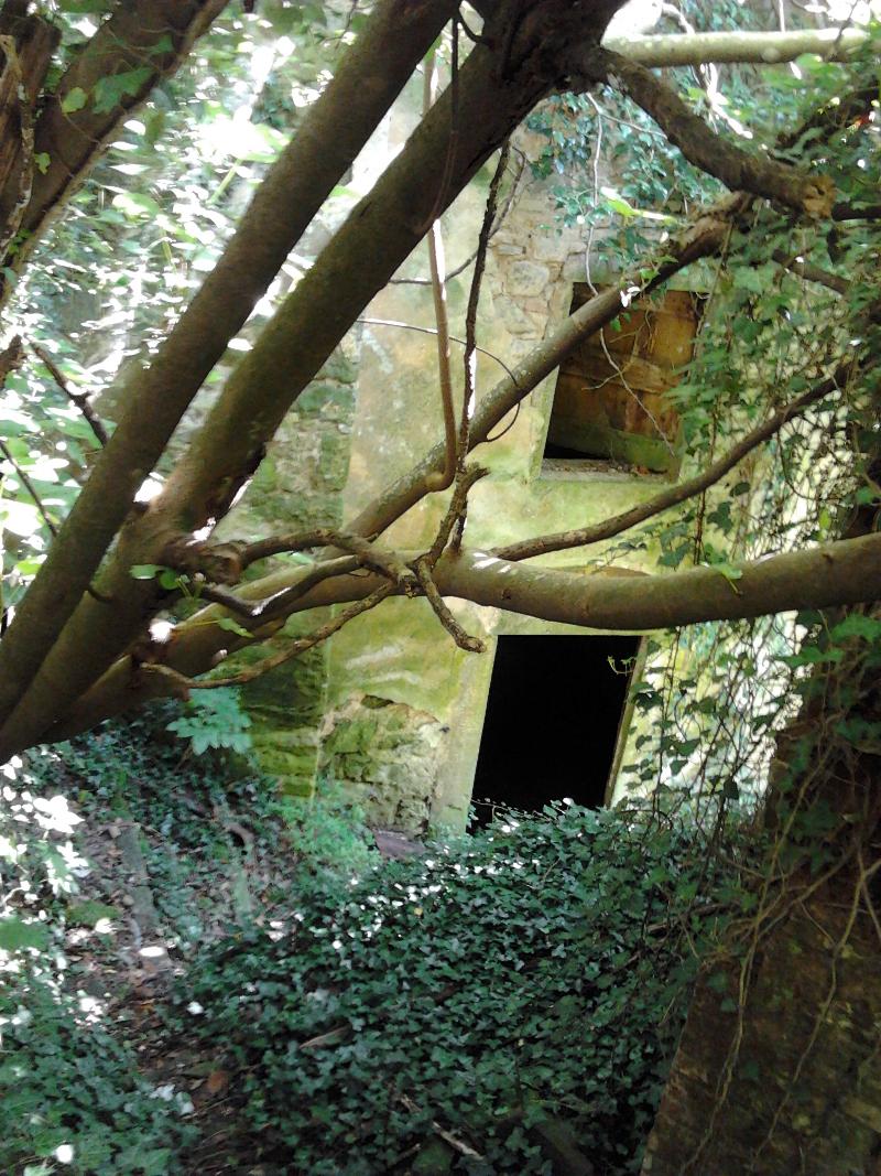 ogromne_drzewa_ruiny_miasto_widmo_moja_toskania_buiano_bugnano_foto_alessandro