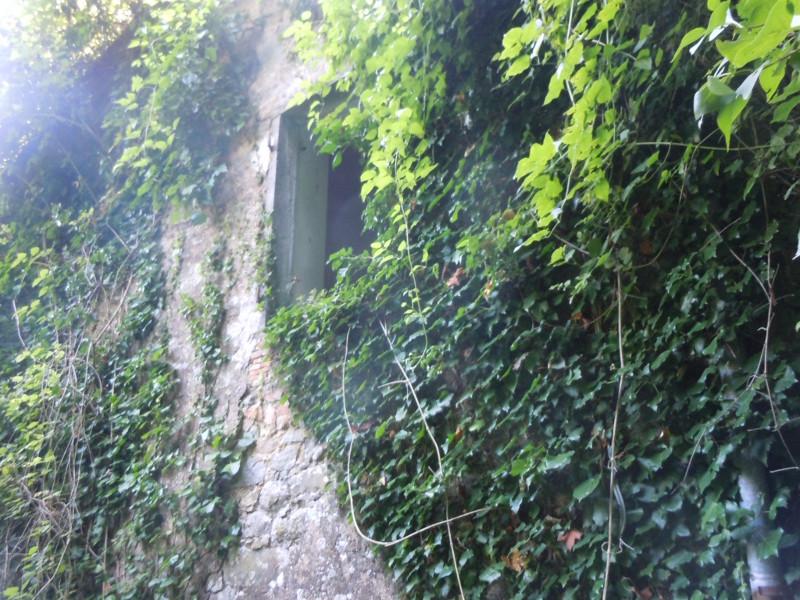 okno_bluszcz_buiano_bugnano_moja_Toskania