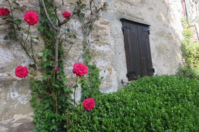 roze_sambuca_castello_moja_toskania