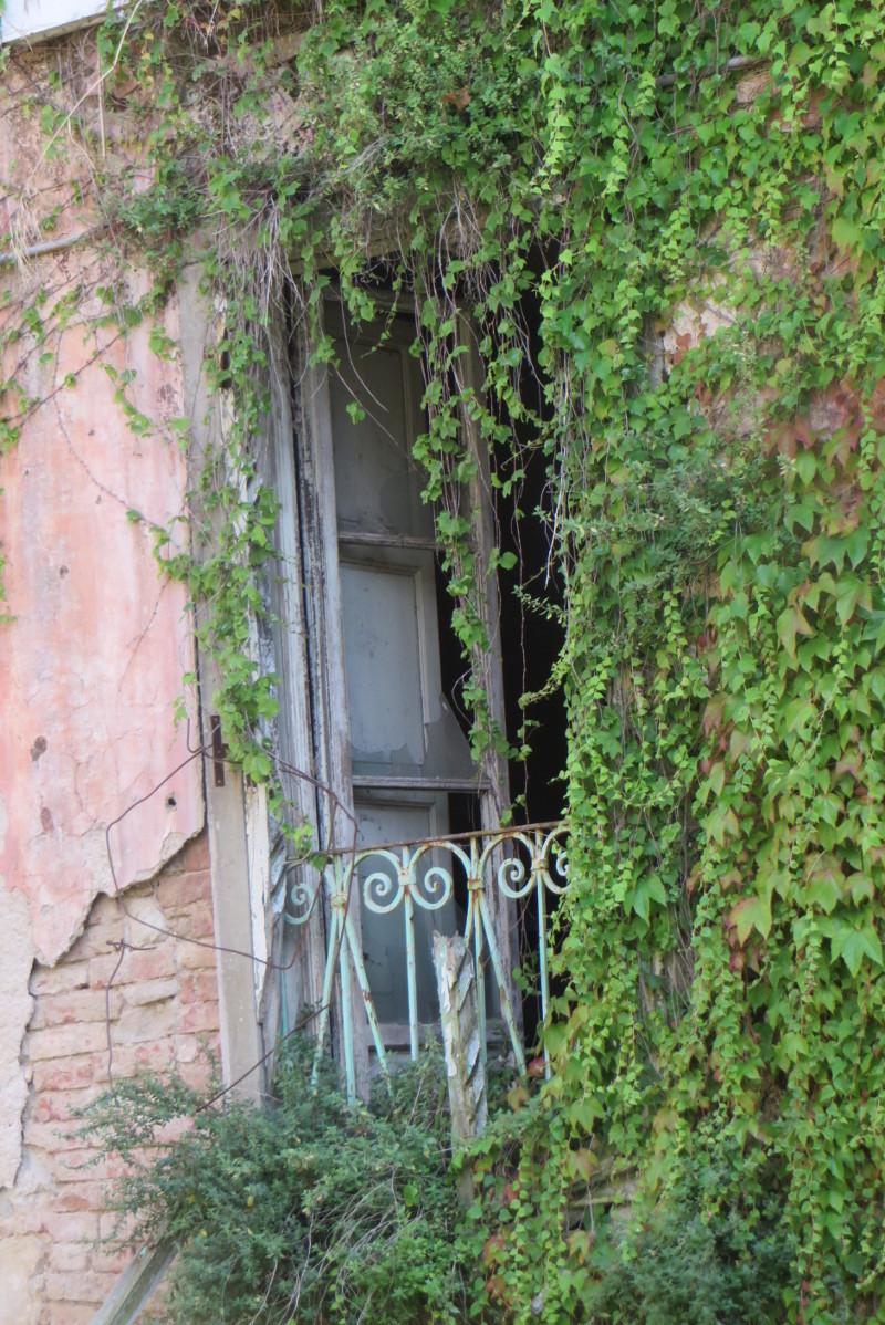 zarosniete_okno_moja_toskania_castelnuovo_dei_sabbioni