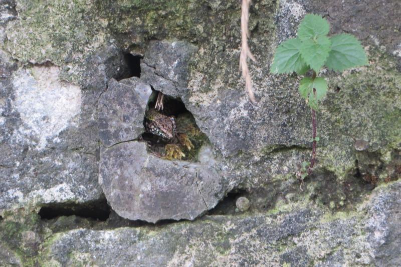 jaszczurka_moja_toskania