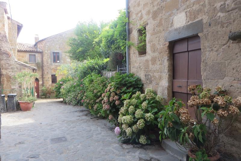 kwiaty_civita_di_Bagnoregio_moja_toskania