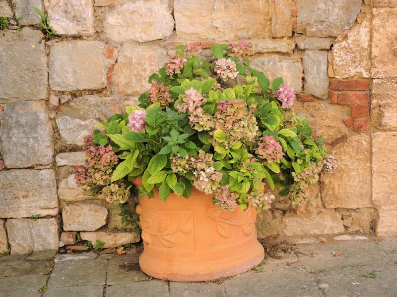 kwiaty_moja_toskania_rocca_D_orcia