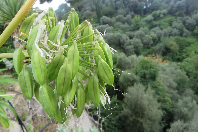 kwiaty_portofino_moja_toskania