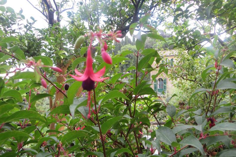 portofino_kwiaty_moja_toskania