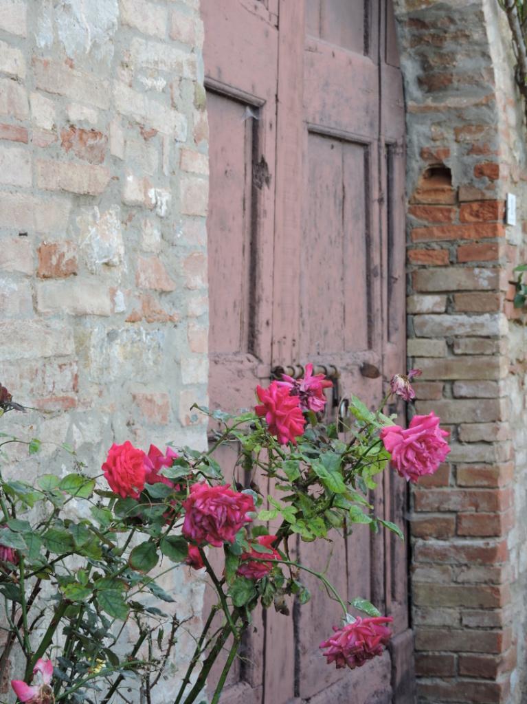 rozowe_roze_moja_toskania_rocca_d_orcia