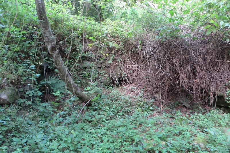 ruiny_domu_w_lesie_treppio_moja_toskania