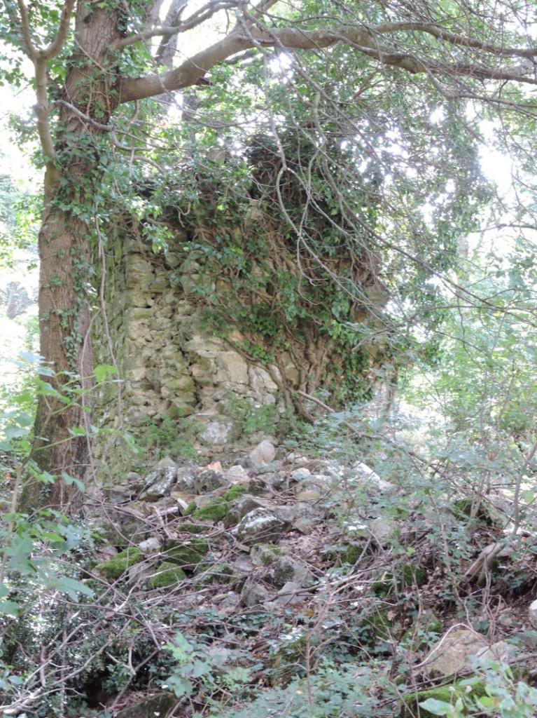 ruiny_drzewo_rocca_silvana_selvena_moja_Toskania