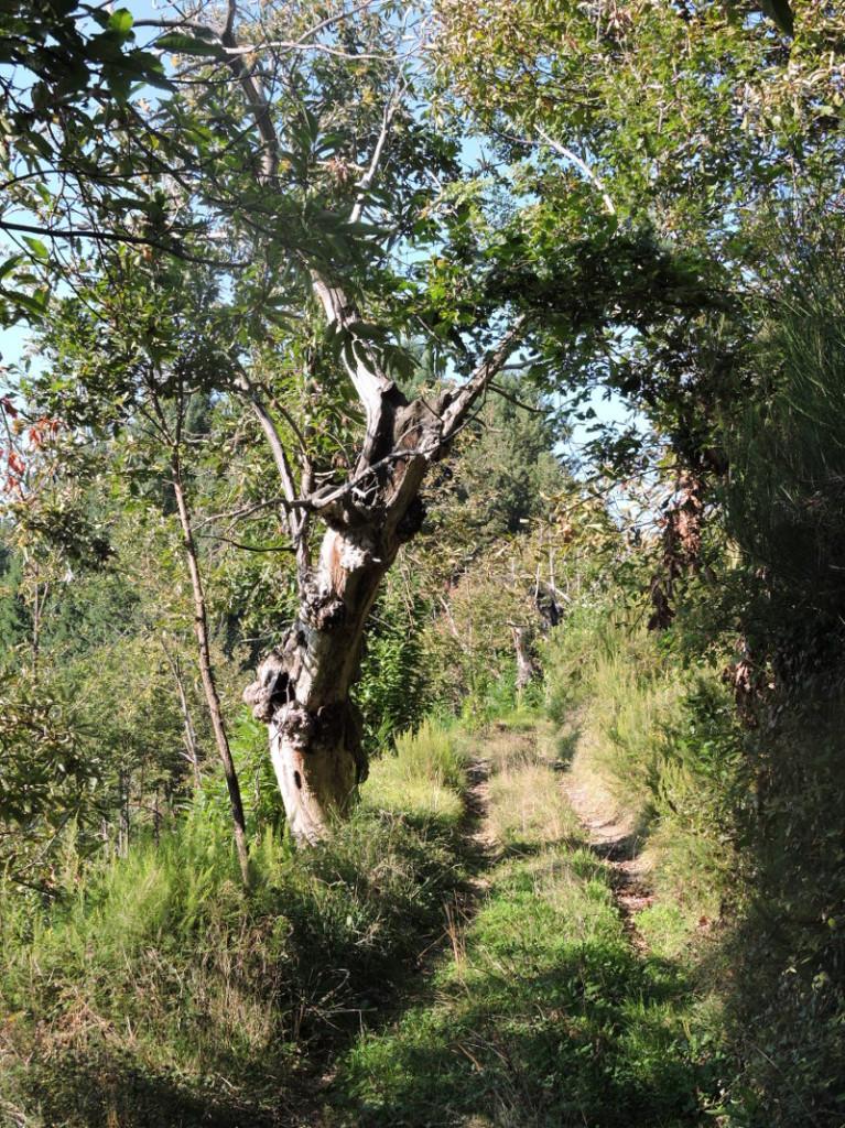drzewo_przy_drodze_bergiola_moja_toskania