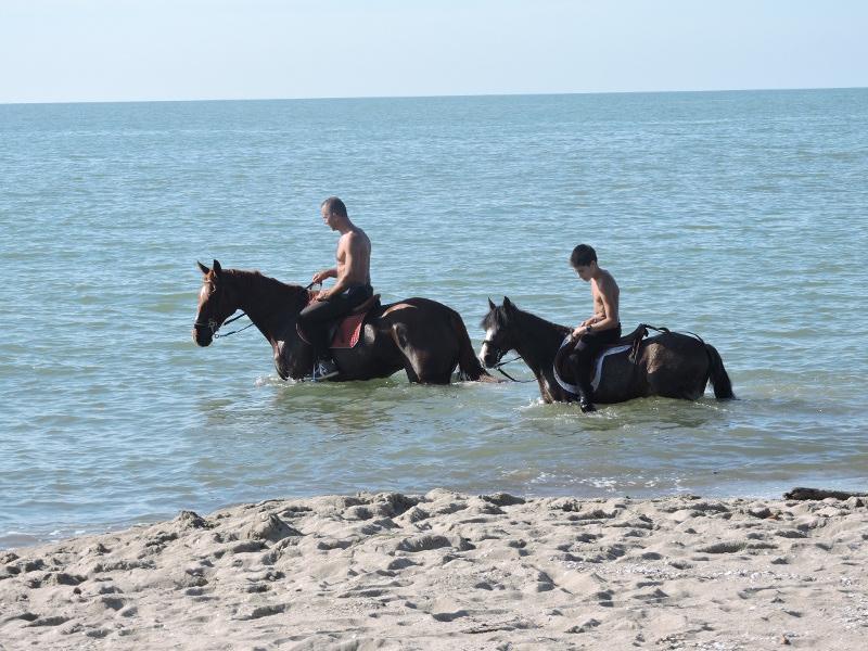 konie_w_kapieli_moja_Toskania