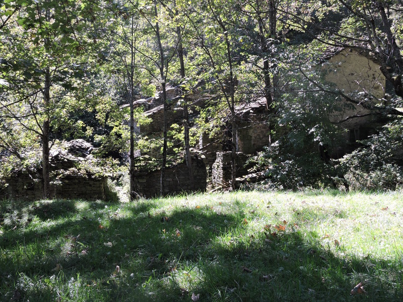 ruiny_za_drzewami_moja_toskania_formentara