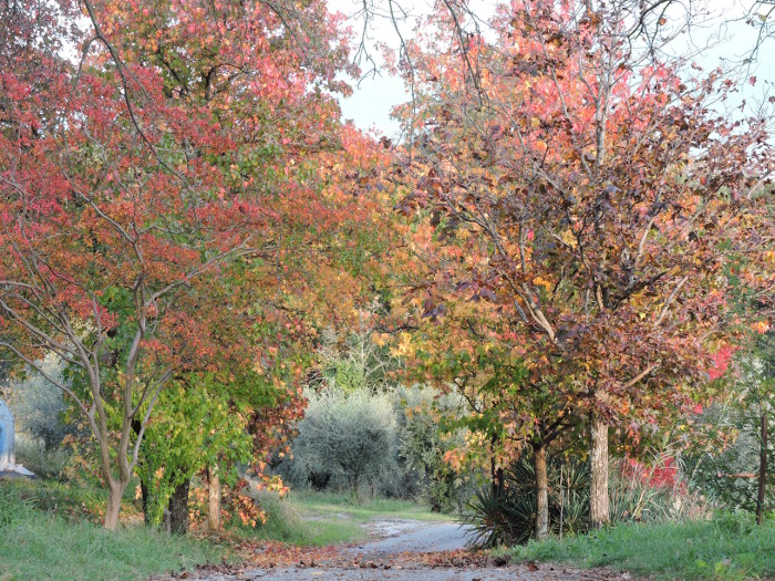jesienna_aleja_moja_toskania