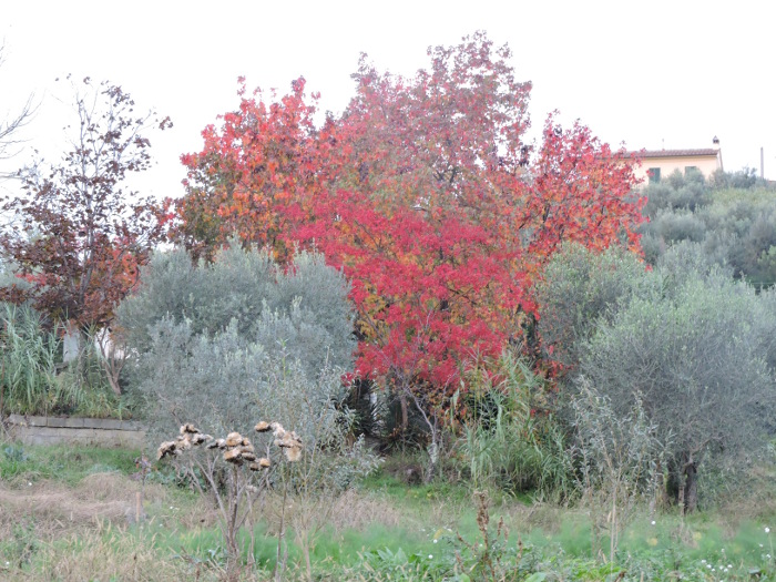 jesienna_wies_toskanska_moja_toskania