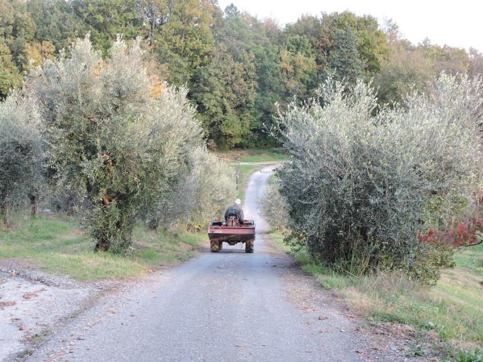 traktor_i_drzewa_oliwne_moja_toskania