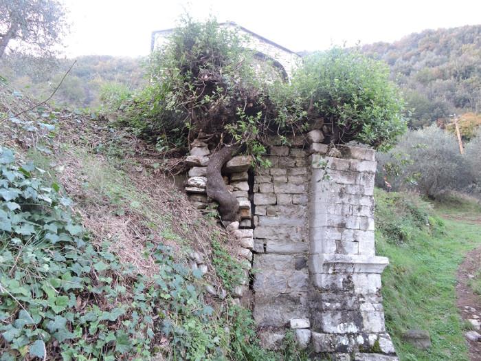 drzewo_w_murze_moja_toskania
