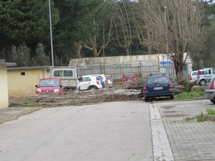 dlugie_drzewo_upadlo_moja_toskania_wlochy