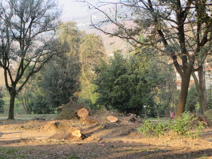 park villone_konary_drzew_pistoia_moja_Toskania