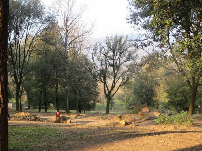 pnie_drzew_park_villone_moja_Toskania