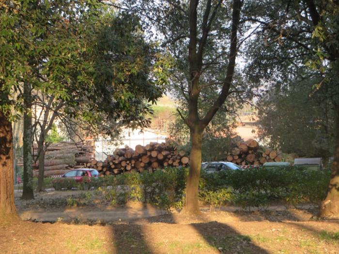 uciete_drzewa_park_villone_moja_toskania