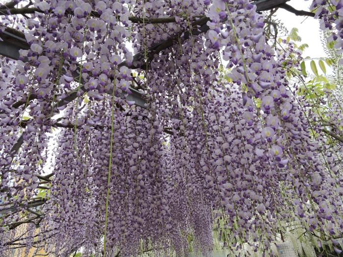 kwiaty_z_bliska_moja_toskania_peccioli