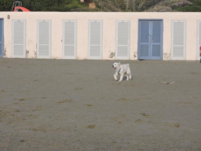 pies_na_plazy_moja_Toskania