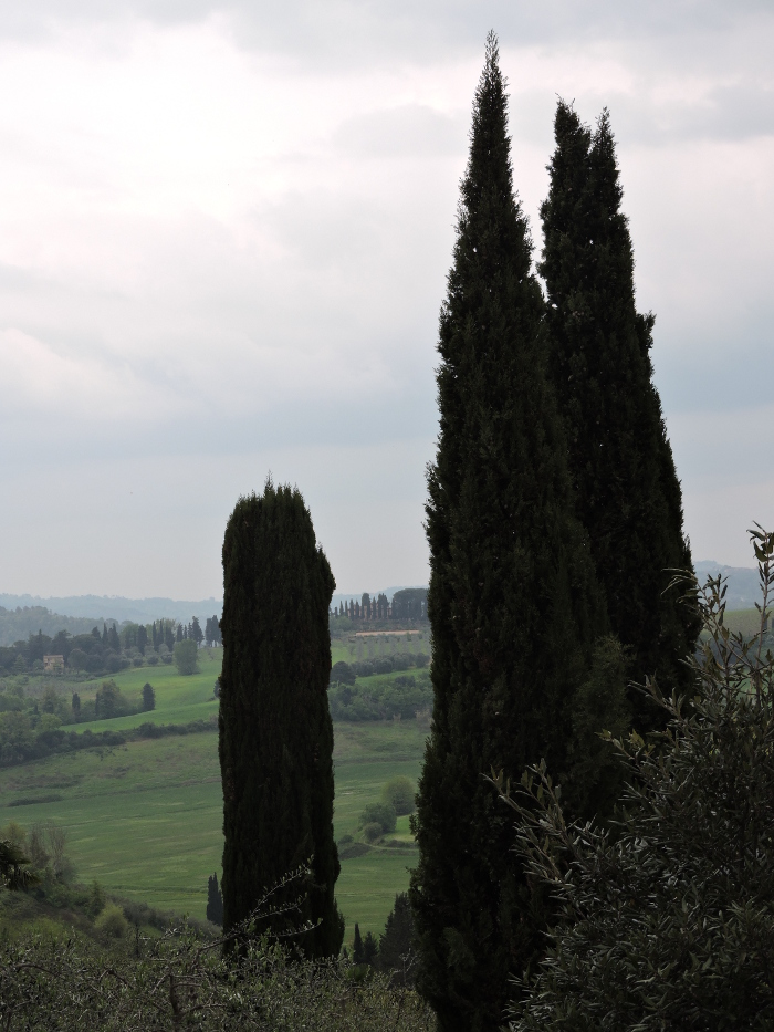 widok_z_parku_moja_Toskania_peccioli