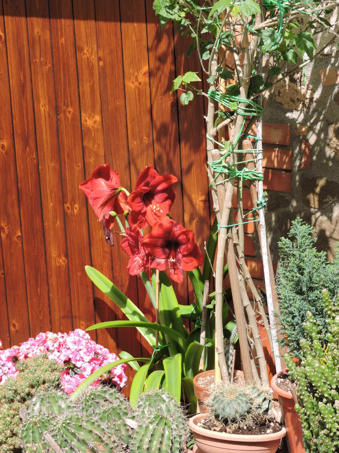 kwiaty_montalcino_moja_toskania