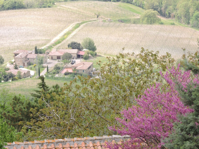 kwitnace_drzewo_montalcino_moja_Toskania